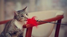 Портрет отечественного молодого striped кота играет с игрушкой Стоковое Фото