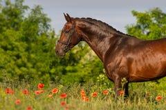Портрет лошади в цветках Стоковая Фотография
