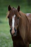Портрет лошади на запачканной предпосылке Стоковое Изображение RF