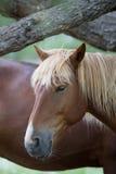 Портрет лошади на запачканной предпосылке Стоковые Фото