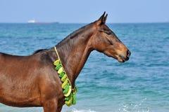 Портрет лошади на пляже стоковое изображение rf
