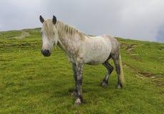 портрет лошади одичалый Стоковая Фотография RF