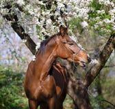 Портрет лошади под деревом стоковое фото rf