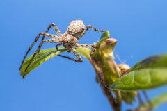 Портрет паука Стоковое Изображение RF
