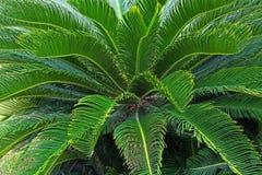 Портрет пальмы стоковое фото rf