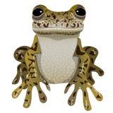 портрет периода лягушки весну Стоковые Фото