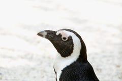 Портрет пингвина на левой стороне Стоковое фото RF