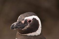 портрет пингвина Стоковое Изображение