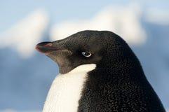 портрет пингвинов adelie Стоковые Фотографии RF