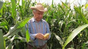 Портрет пожилого фермера переплетая в мозоли руки пробует зерна на вкусе видеоматериал