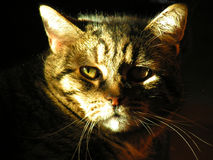портрет пожилых людей кота стоковые изображения