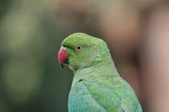 Портрет попугая Стоковое Фото