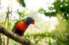 Портрет попугая Стоковые Фото