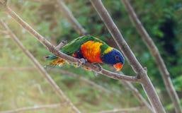 Портрет попугая Стоковая Фотография