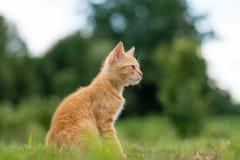 Портрет прелестного молодого striped кота, сидя на траве Стоковое фото RF