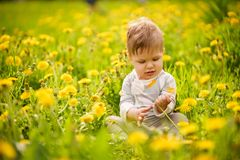 Портрет прелестный играть младенца внешний в солнечных одуванчиках field Стоковое фото RF