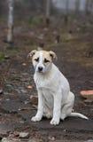 Портрет прелестного рассеянного щенка стоковое фото rf