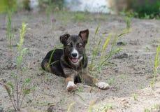 Портрет прелестного рассеянного щенка стоковое фото