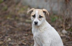 Портрет прелестного смешанного щенка породы стоковые изображения