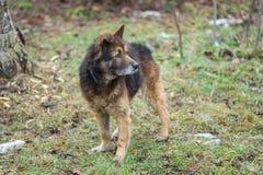 Портрет прелестной собаки взаимн породы стоковое фото rf