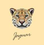Портрет проиллюстрированный вектором ягуара бесплатная иллюстрация