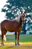 Портрет профиля головки одичалой лошади Стоковые Фото