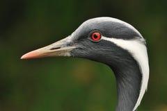 портрет птицы Стоковое Фото