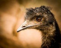 Портрет птицы Стоковое Изображение RF