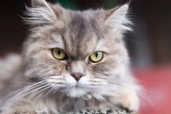 Портрет пушистого кота Стоковые Изображения
