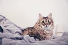 Портрет пушистого кота стоковые фотографии rf
