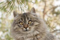 Портрет пушистого кота Стоковые Фото