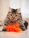 Портрет пушистого striped кота Стоковая Фотография