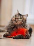 Портрет пушистого striped кота Стоковые Фото