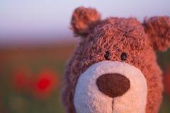 Портрет плюшевого медвежонка Стоковое Изображение RF