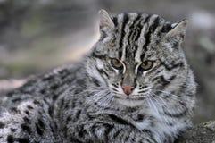 портрет рыболовства кота Стоковое Фото