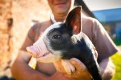 Портрет свиньи стоковое фото rf