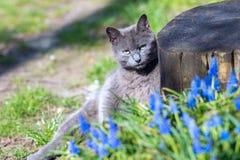 Портрет серого кота того отдыхает рядом с старым пнем Стоковые Фотографии RF