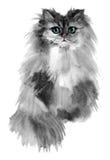 Портрет серого милого кота при покрашенная синь наблюдает Стоковое Изображение