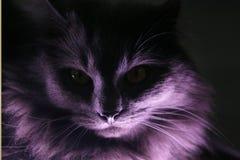 Портрет серого longhair кота иллюстрация штока