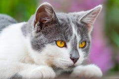 Портрет сер-белого котенка с ярким апельсином наблюдает против th стоковые изображения rf