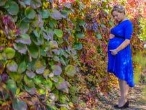 Портрет симпатичная молодая белокурая беременная женщина Стоковая Фотография RF