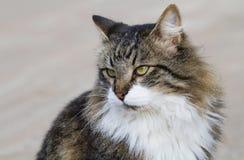 Портрет симпатичного мехового кота Стоковая Фотография