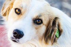 Портрет симпатичной бездомной собаки Стоковые Фотографии RF
