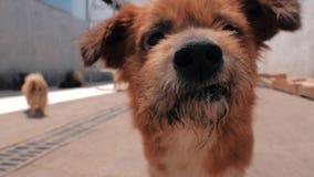 Портрет случайной получившейся отказ камеры собаки следовать акции видеоматериалы