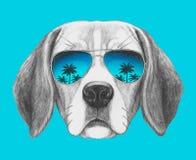 Портрет собаки бигля с солнечными очками зеркала Стоковое фото RF