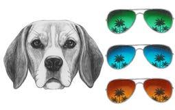 Портрет собаки бигля с солнечными очками зеркала Стоковые Изображения