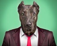 Портрет собаки в деловом костюме Стоковые Фото