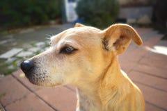 Портрет собаки в саде Стоковые Фотографии RF