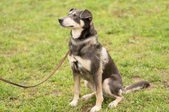 Портрет собаки крупного плана Стоковые Изображения RF