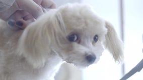 Портрет собаки подола сток-видео